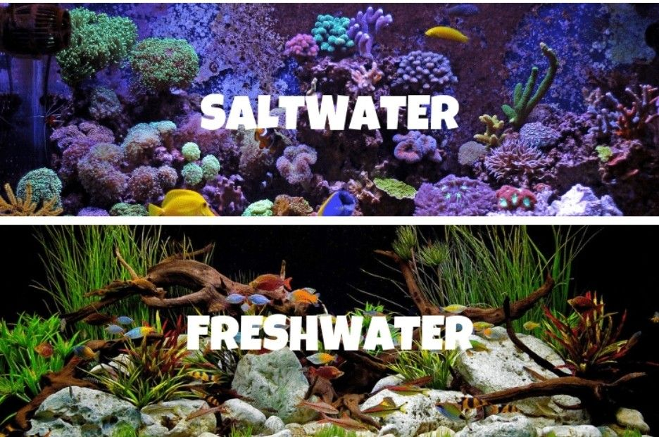 Saltwater vs Freshwater Aquariums: 21 Pros and Cons ...