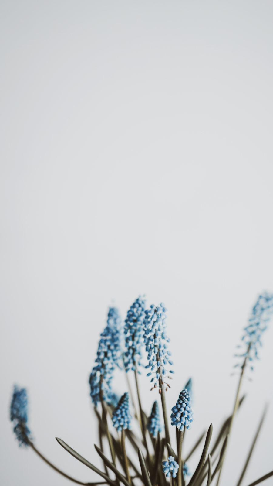Freebie: Papéis de parede grátis para celular • Um Toque de Framboesa