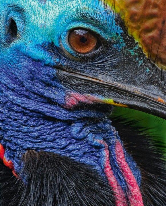 colorful resident of the australian rainforest