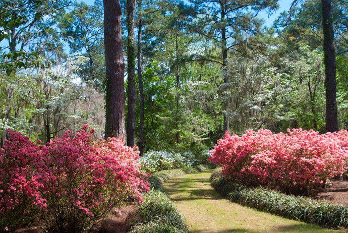 0b564aa457e0f52fef8239a9faef361e - Maclay Gardens State Park Tallahassee Florida