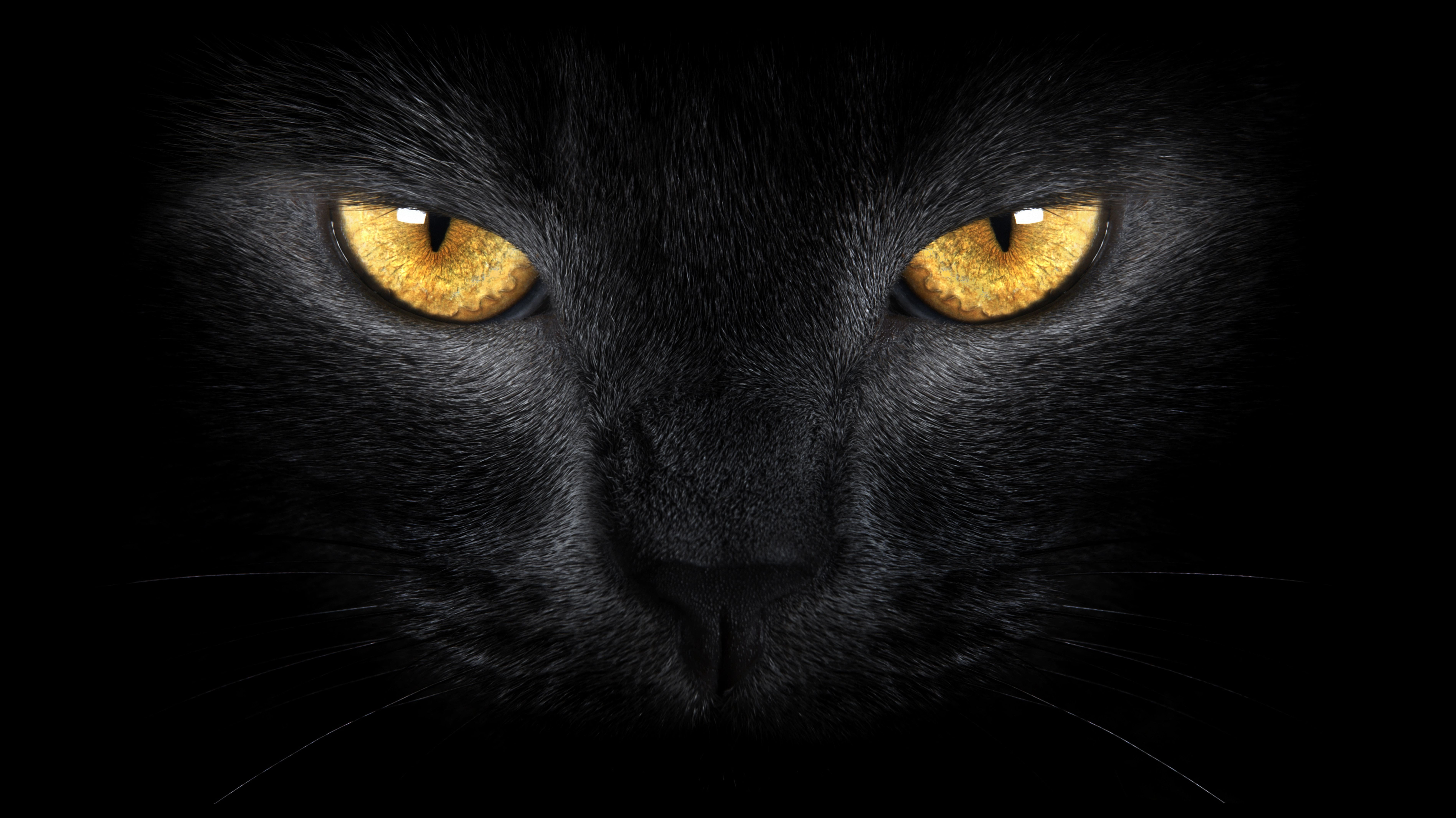 Download Wallpaper Cat Eyes Black Free Desktop Wallpaper In The Resolution 7588x4264 Picture 392552 Black Cat Eyes Cats Cat Poems
