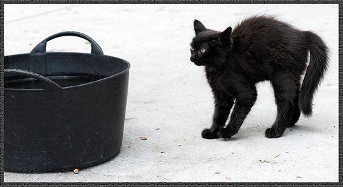 Gato escaldado tem medo de água fria