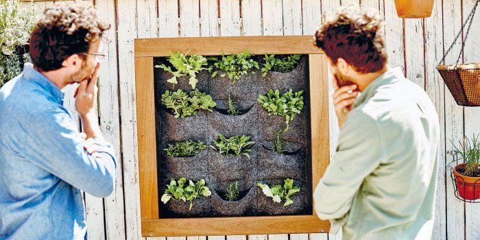 DIY mur végétal : comment le faire soi même