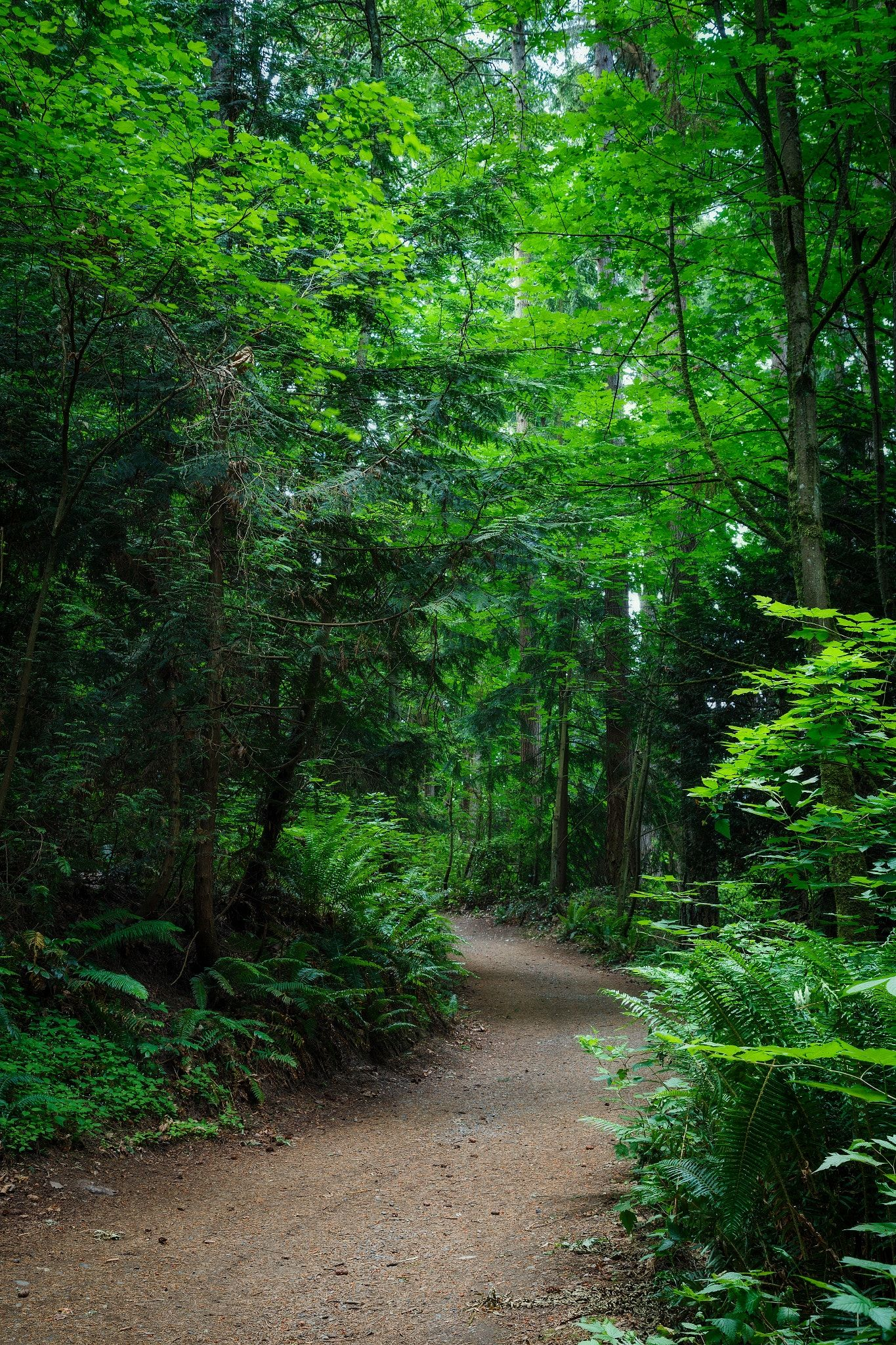 Meander Beautiful Nature Forest Landscape Scenic Routes