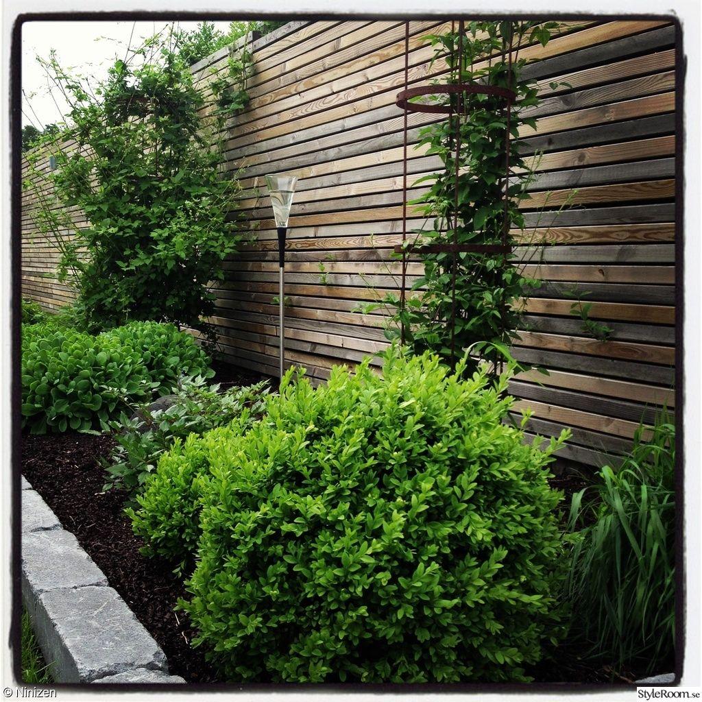 Trädgård plank trädgård : trädgÃ¥rd | spaljé, plank, häck.. | Pinterest | Växter, Utomhus och ...