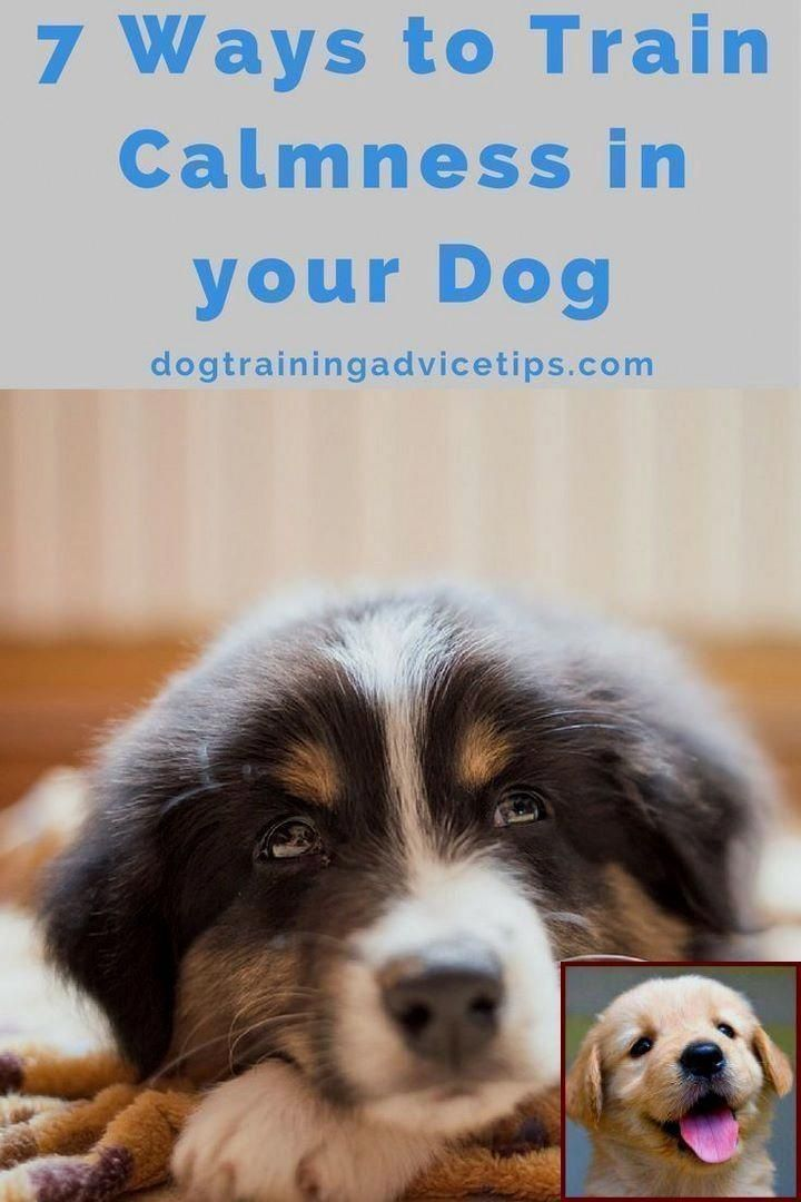 10 Pro Tips For Dog Training By Experts Puppy Training Dog