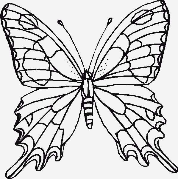 Pin By Lorrie Allred On Butterflies Butterfly Coloring Page Flower Coloring Pages Butterfly Printable