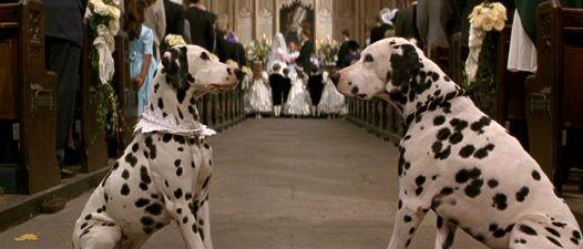 101 Dalmatians Wedding Scene Dalmatian Live Action