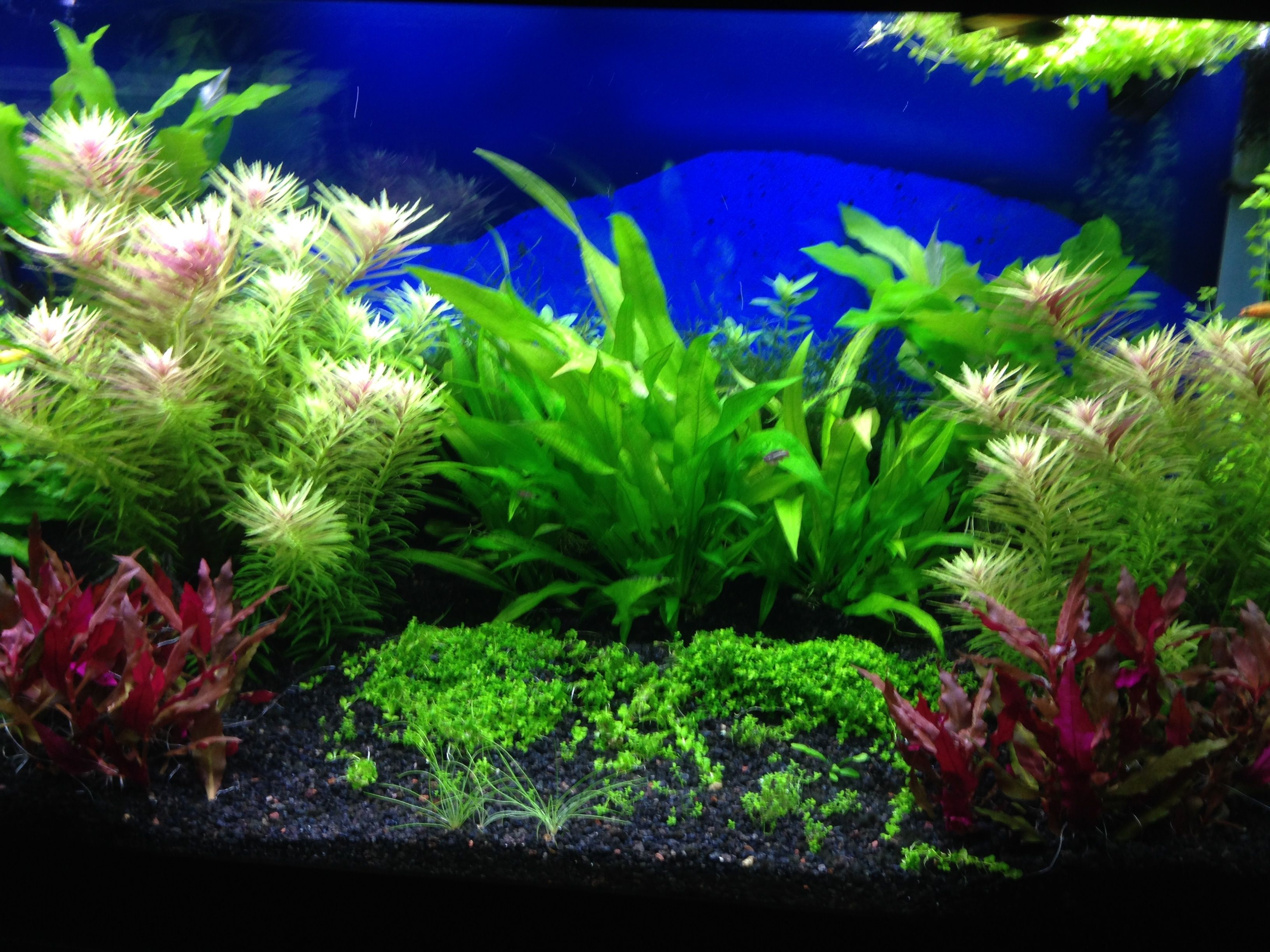 Aquariums, Fish Aquariums, Fish Tanks