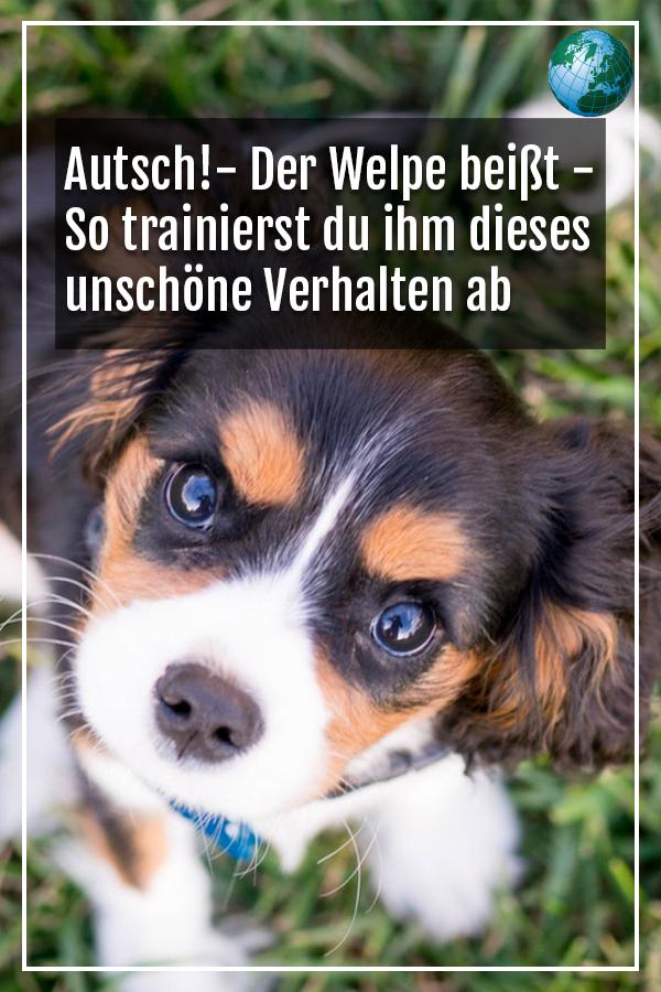 Welpe Beisst So Trainieren Sie Ihm Das Verhalten Ab Mit Bildern Welpen Hunde Welpen Erziehung Hund Bellt Nachts