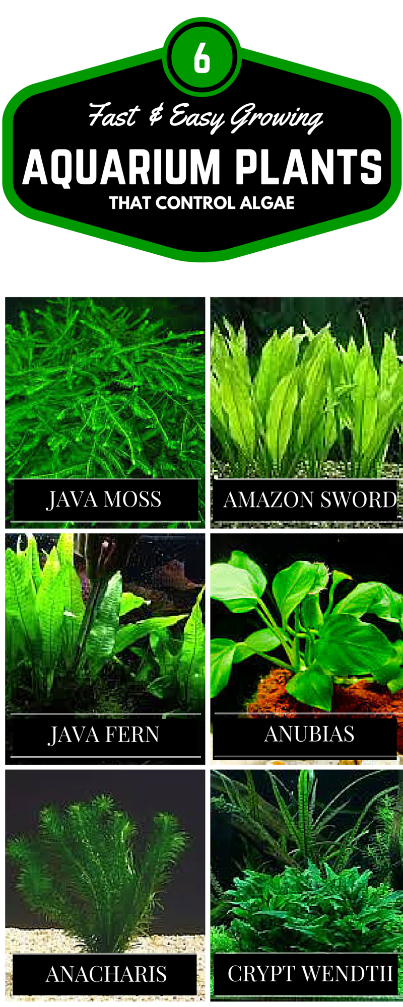 Fish tank quick cycle - 37 Easy Ways To Control Algae And Get Crystal Clear Aquarium Water