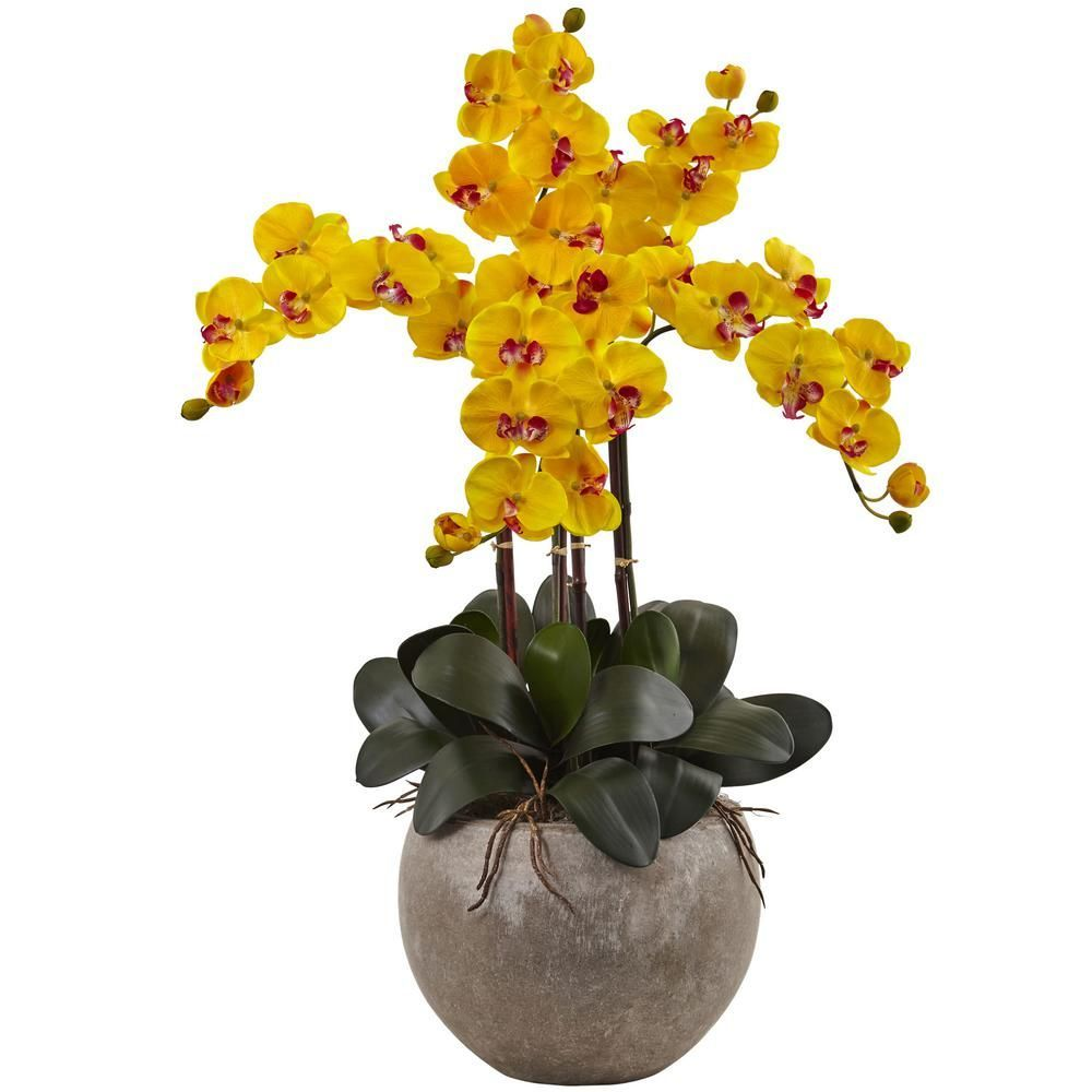 Phalaenopsis orchid arrangement with sand colored bowl yellows