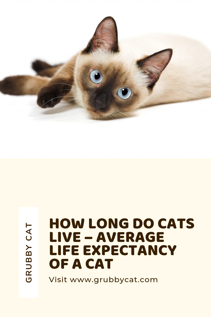 How Long Do Cats Live Average Life Expectancy Of A Cat