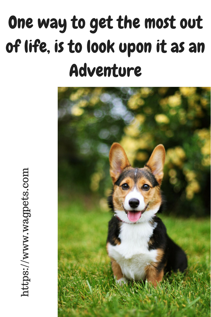 Inspirational Dog Quotes About Life And Love Puppy Quotes Puppies Dog Quotes