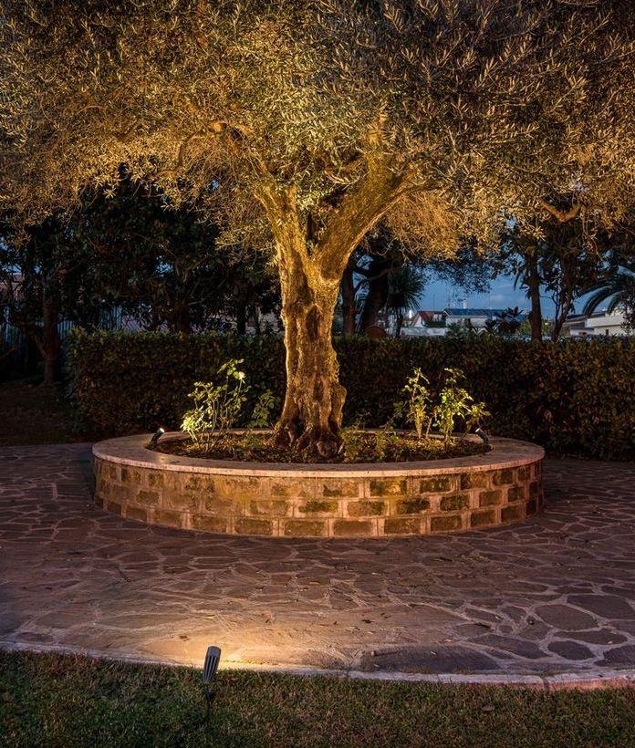 Pin By Shannon Wynne On Garden Lighting Designs Garden Lighting Design Tree Lighting Landscape Lighting