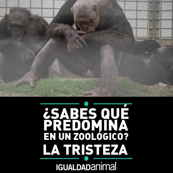 No A Los Zoologicos Animales Frases Animales Y Acuario