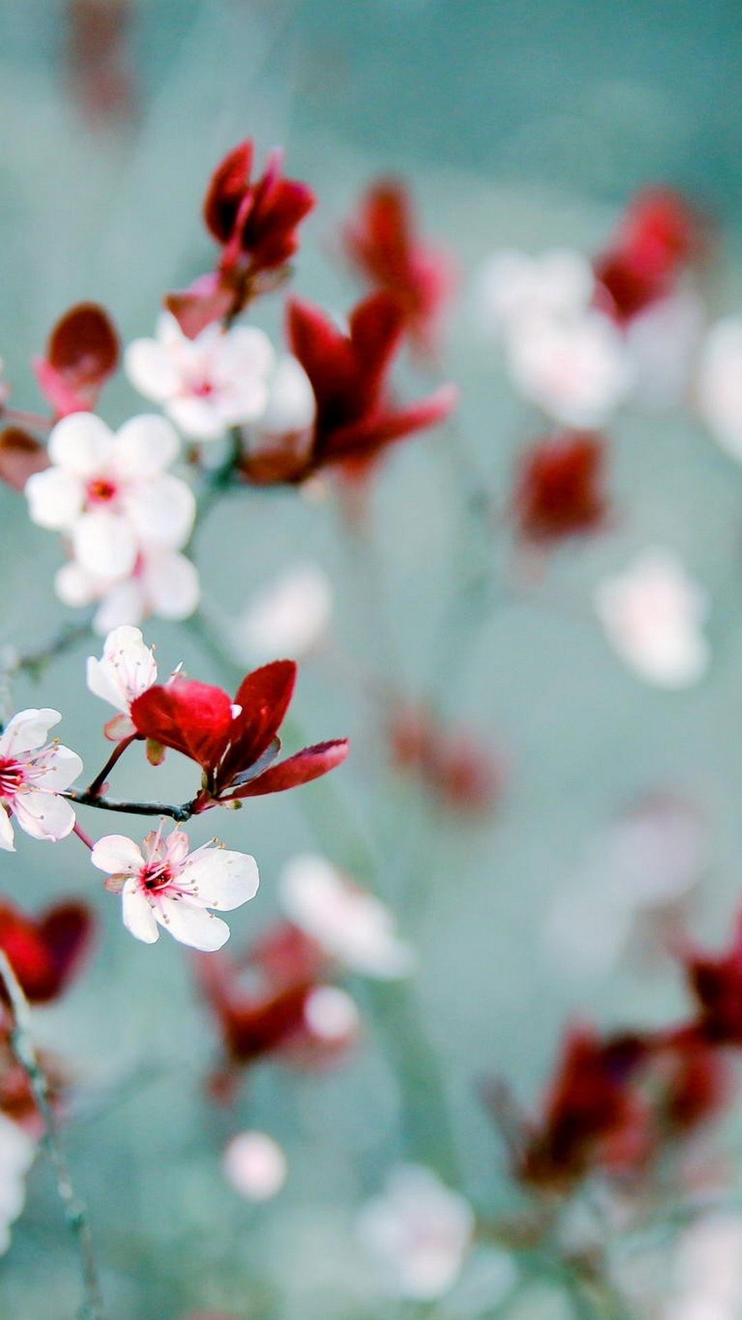 Spring Wallpaper For Android 2019 Through The Mist Pinterest
