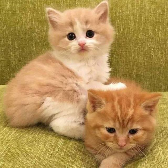 If I Ever Get A Kitten I Will Name Him Garfield Or Tigger Or Get Two So I Could Have Both Cute Cats Cats Pretty Cats