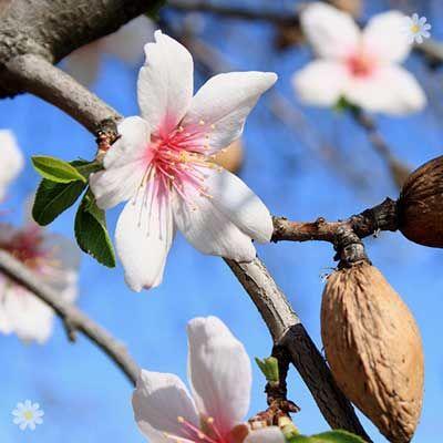 Amazon Co Uk Orchids All Departments Dwarf Fruit Trees Fruit Trees Tree Uk