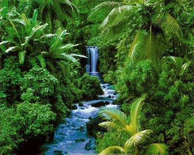 Rainforests. | Rainforests | Pinterest | Green, Cas and South america