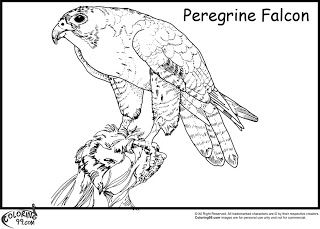 peregrine falcon coloring pages
