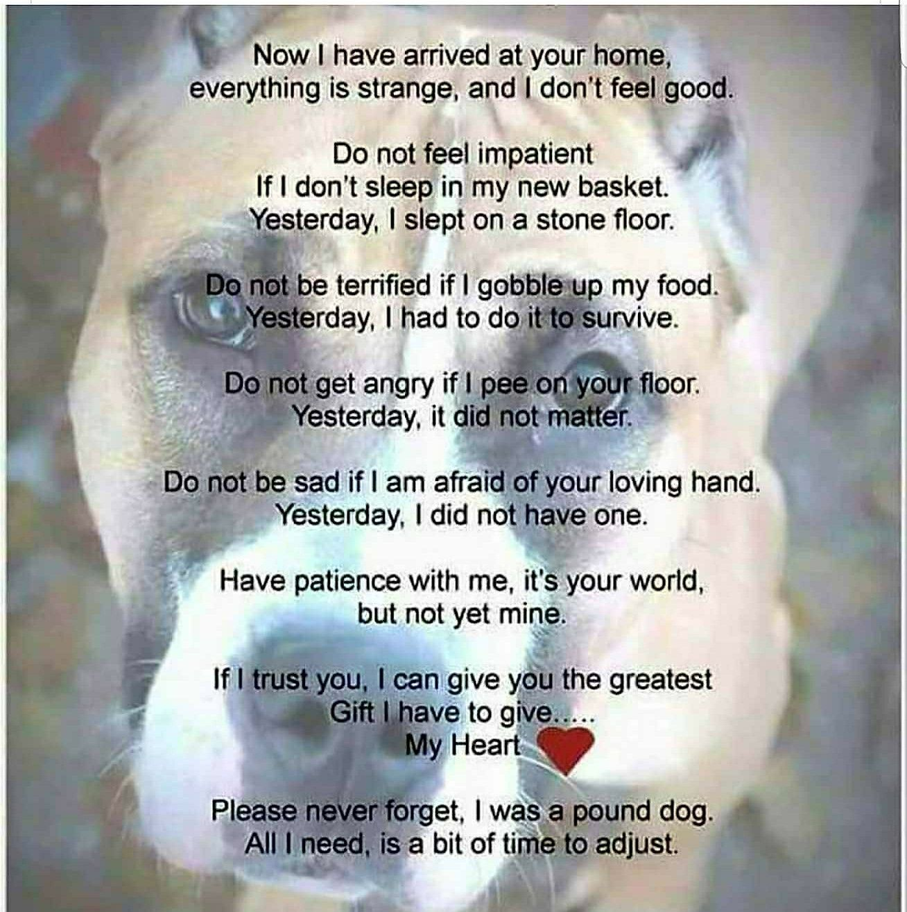 Pin By Crystal On Pitties Shelter Dogs Funny Dogs Dog Quotes