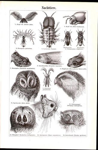 Lots Of Creature Faces 1887 (by SurrendrDorothy)