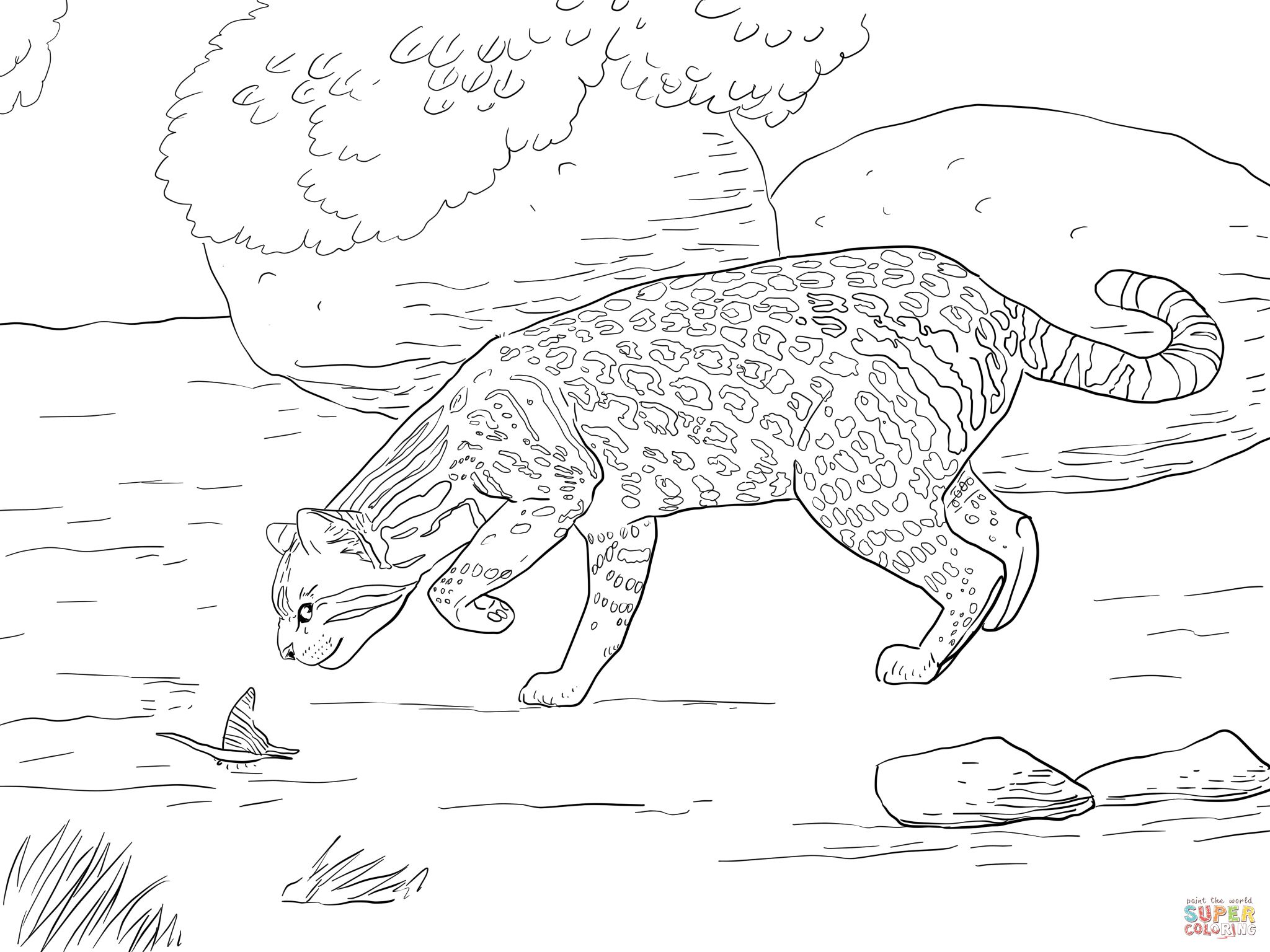 Ocelot And Butterfly Super Coloring Butterfly Coloring Page