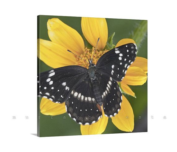 Canvas Photo Gallery Wrap Floral Art Photograph by MurrayBolesta