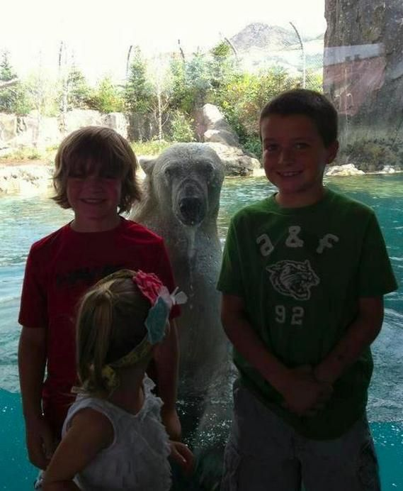 The Greatest Animal Photobombs Of All Time Animal Funny Animal - The 39 funniest animal photobombs of all time