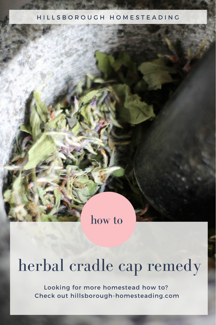 How To Treat Cradle Cap With Herbs From Your Backyard With Images Herbalism Remedies Herbal Remedies