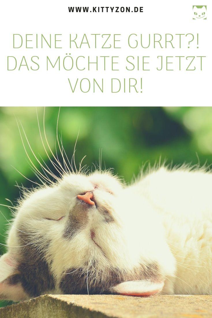Katzensprache Das Bedeutet Es Wenn Deine Katze Gurrt