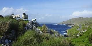 irland - Google-Suche