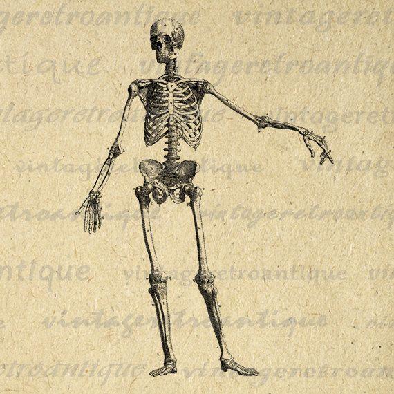 Printable Skeleton Diagram Graphic Digital Image Download Artwork ...