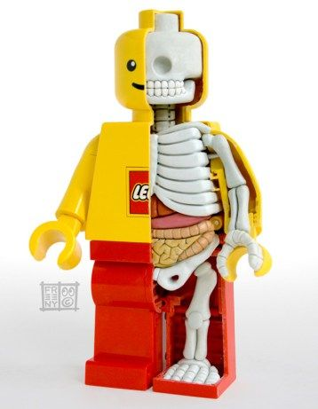 After seeing this, you may have a hard time popping their heads off. Minifig Anatomical model by Jason Freeny.
