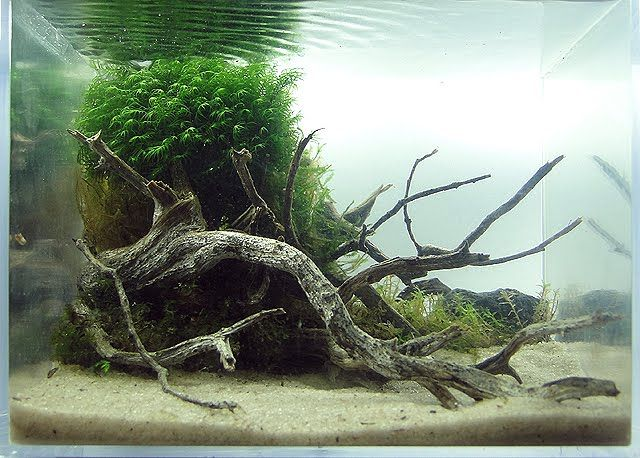 Another beautiful aquascape. | Nature aquarium, Aquascape ...