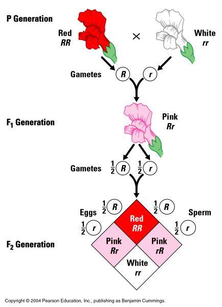 Theoretical Genetics Biology Pinterest Genetics