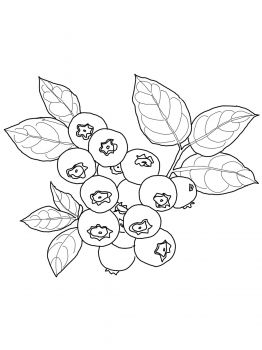 blueberry muffin coloring pages - blueberry downloads and sketches pinterest blueberry