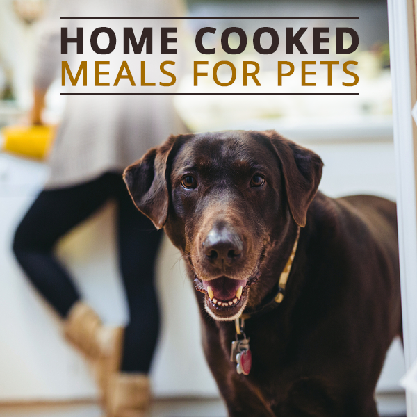 More People Opting To Cook Pets Meals Dog Food Recipes No Cook Meals Can Dogs Eat