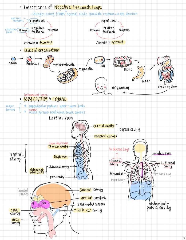 studyblr 醒醒 — [09.18.16] anatomy ch.1 notes! mini test tmrw and ...