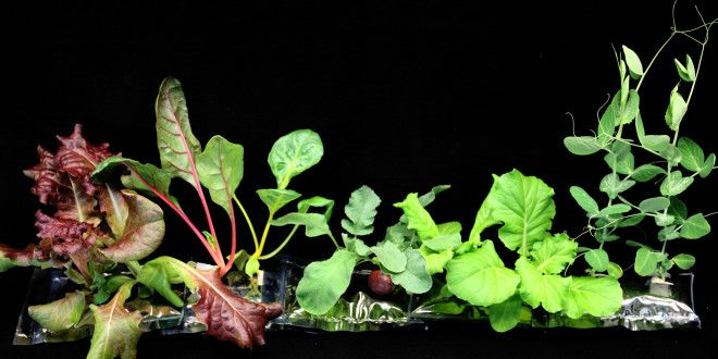Those Veggies Grown on the ISS Get Humans Closer to Mars