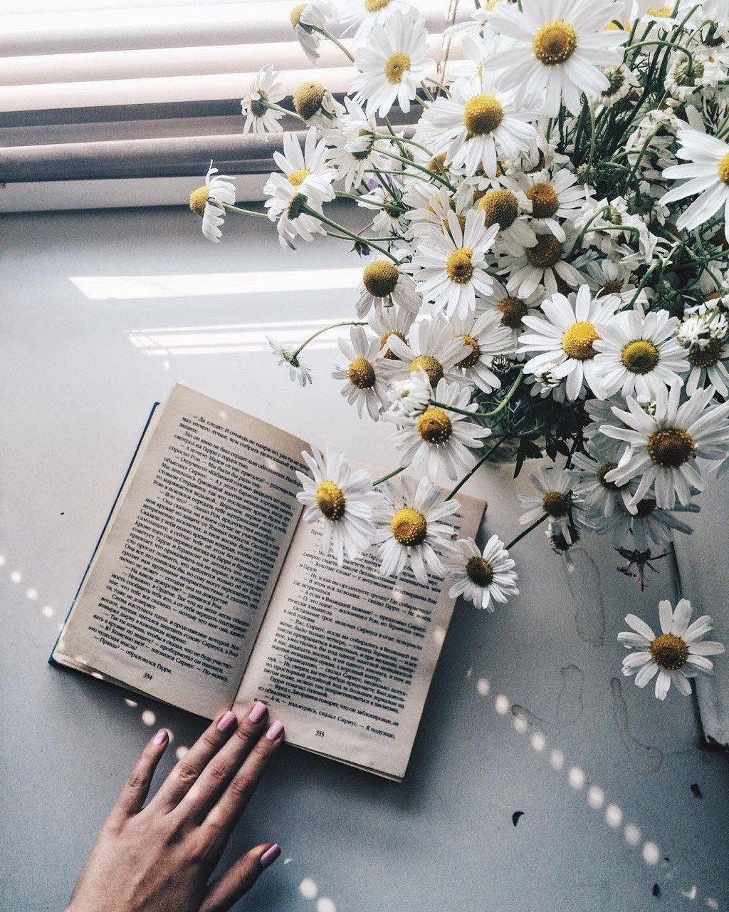 Daisies with Book in 2020   Flower aesthetic, Aesthetic ...