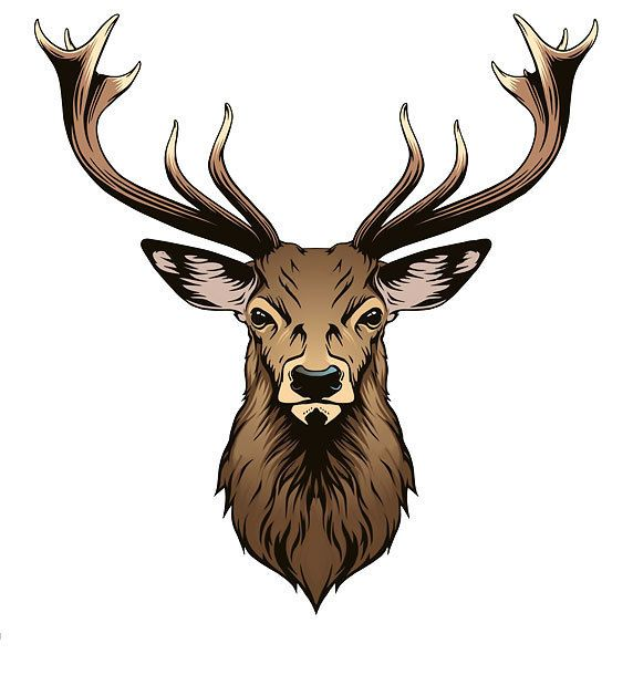 deer head tattoo design deer head tattoo head tattoos and tattoo rh pinterest com browning deer head tattoo designs Deer Skull Tattoos