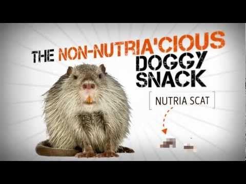 Ask an Expert: Taboo Doggy Snacks