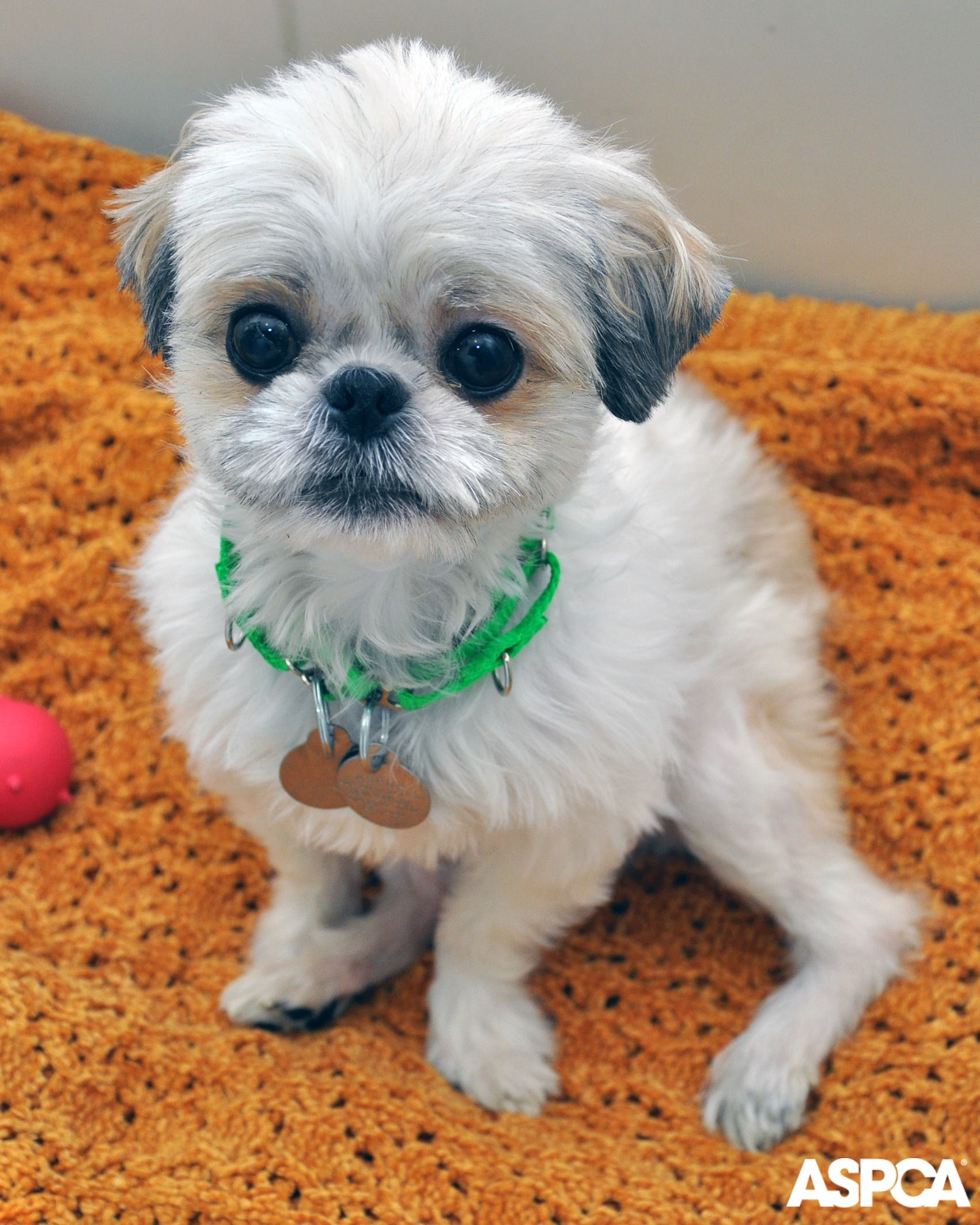 Abandoned In An Elevator Leilani S Miraculous Rescue Cute Little Dogs Cute Baby Animals Animals