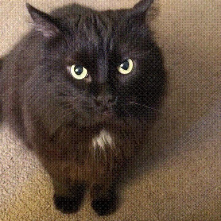 The way this cat's pupils dilate Cat pupils, Cat pics, Cats