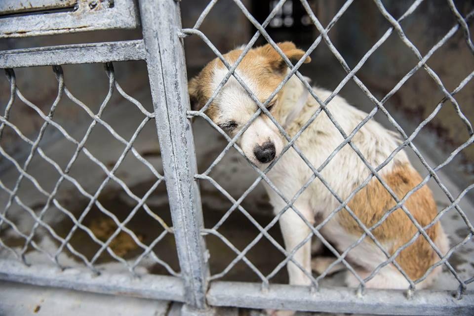 Photographer captures homeless dog's despair Shelter