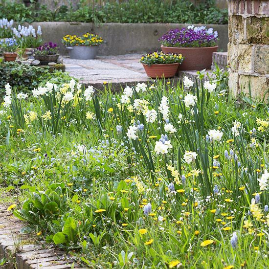 Beautiful bulb combinations spring flowering bulbs for Low maintenance planting schemes