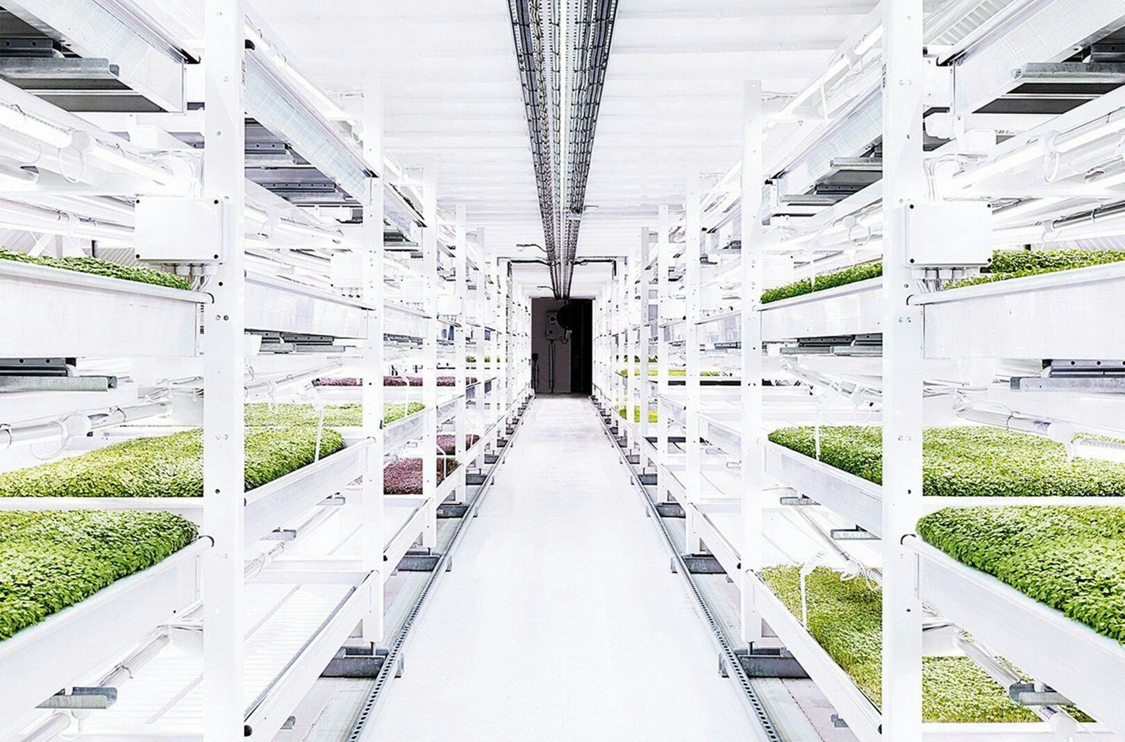 http://www.wired.co.uk/article/underground-hydroponic-farm | d!D ...