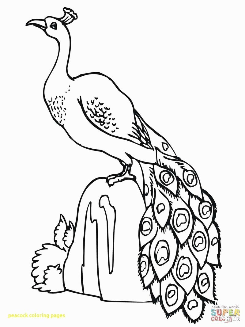 Peacock Coloring Pages Ideas Pdf Printable Free Coloring Sheets Peacock Coloring Pages Bird Coloring Pages Animal Coloring Pages
